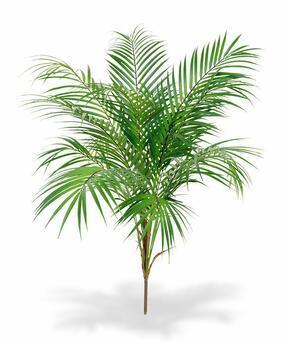 Künstliche Palme Areca 80 cm