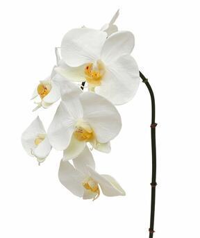 Künstlicher Orchideenzweig weiß 55 cm
