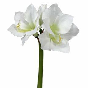 Künstlicher Zweig Amaryllis weiß 55 cm