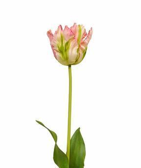 Künstlicher Zweig Tulpe grün-rosa 70 cm