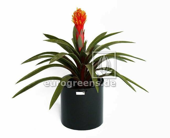 Kunstpflanze Guzmánia 65 cm