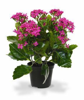 Kunstpflanze Kalanchoa lila 30 cm