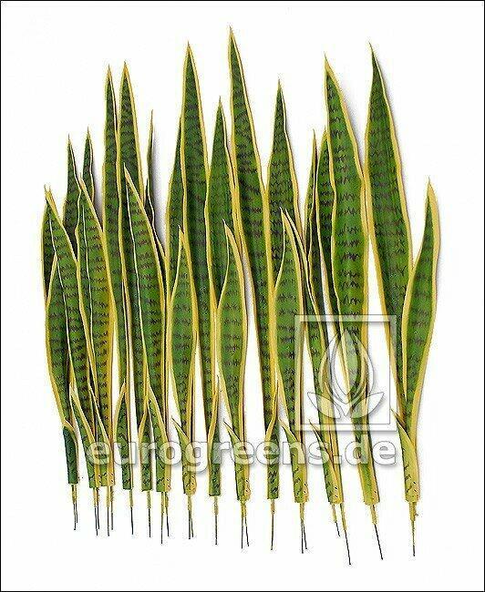 Set aus künstlichen Blättern Svokrinenzungen 85 cm